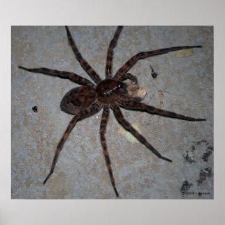 Affiche d'araignée de loup