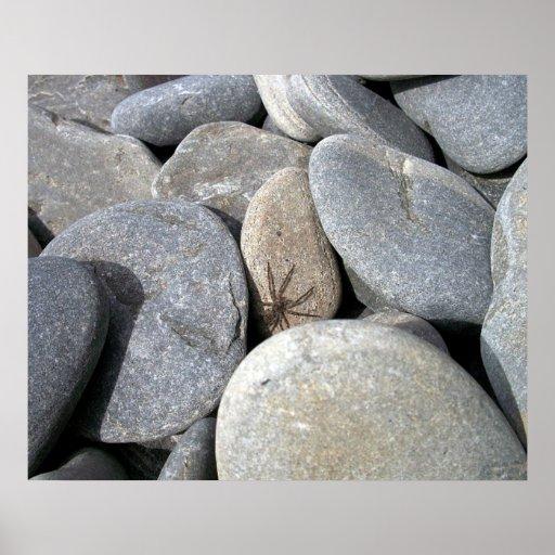 Affiche d'araignée de roche