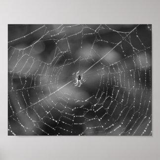 Affiche d'araignée et de Web Poster