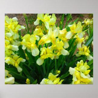 Affiche de fleur d'iris jaune