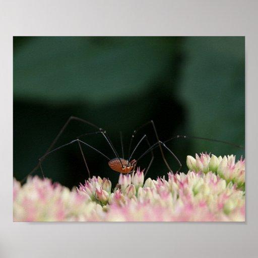 Affiche de la fleur 10x8 d'araignée