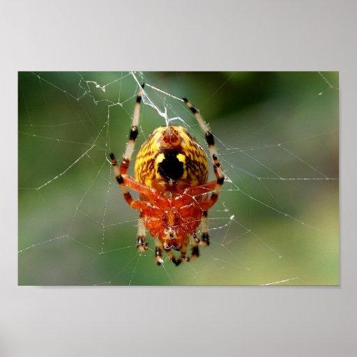 Affiche de la rotation 12x8 d'araignée