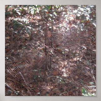 Affiche de toile d'araignée de couleur