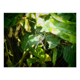 Affiche de toile d'araignée d'Hawaï