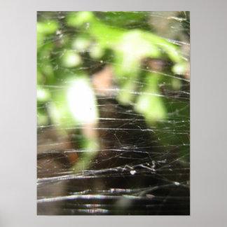 Affiche de toiles d araignée