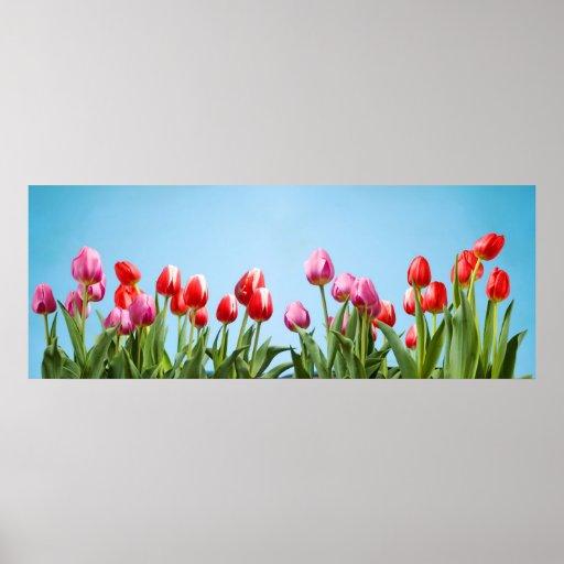 Affiche de tulipes de ressort