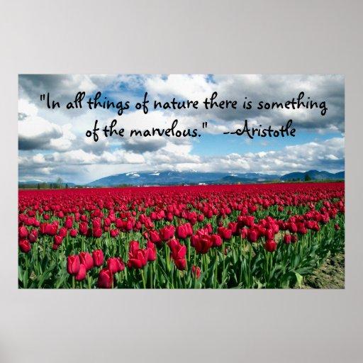 Affiche rouge de champ de tulipes