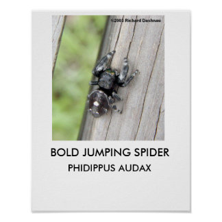 Affiche sautante audacieuse d'araignée