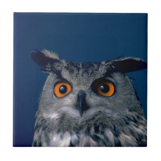 Affordable Owl Holiday Gift Tiles