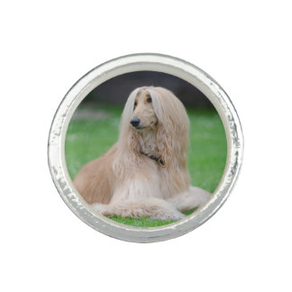 Afghan Hound dog beautiful photo round ring