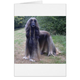Afghan Hound Dog Card