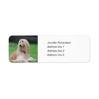 Afghan Hound dog custom return address labels