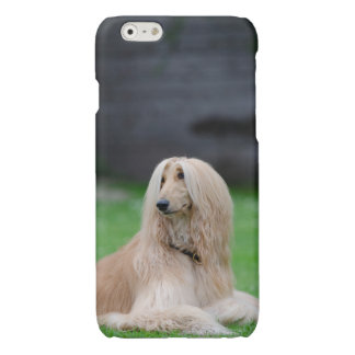 Afghan Hound dog photo glossy iphone 6 case