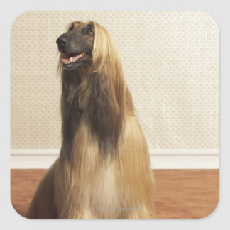 Afghan hound sitting in room 2 square sticker