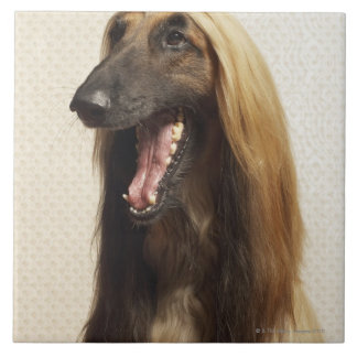 Afghan hound sitting in room tile