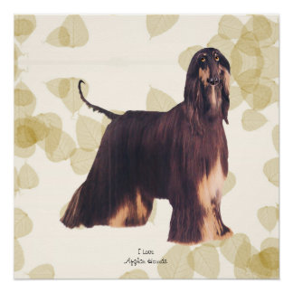 Afghan Hound with Tan Leaves Perfect Poster