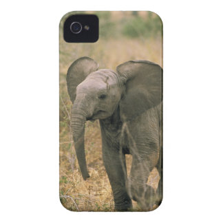 Africa. African elephant, loxodonta africana. Case-Mate iPhone 4 Case