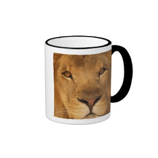 Africa. African male lion, or panthera leo. Ringer Coffee Mug
