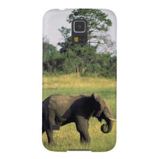 Africa, Botswana, Chobe National Park. Elephant Galaxy S5 Cases