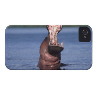 Africa. Botswana. Chobe National Park. Hippo iPhone 4 Case-Mate Case