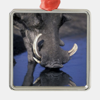 Africa, Botswana, Chobe National Park, Warthog Silver-Colored Square Ornament