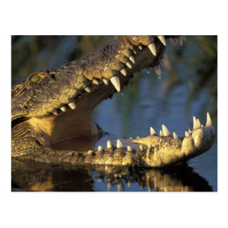 Africa, Botswana, Moremi Game Reserve, Nile Postcard