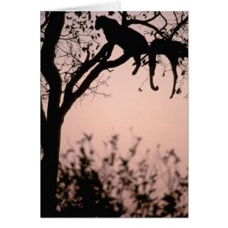 Africa, Botswana, Okavango Delta. Leopard Card