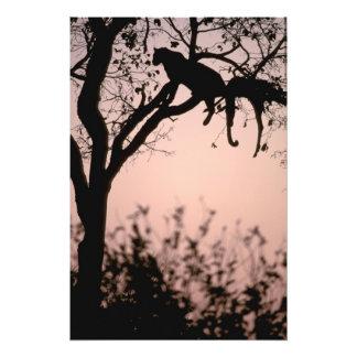 Africa, Botswana, Okavango Delta. Leopard Photographic Print
