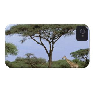 Africa, Botswana, Okavango Delta. Southern iPhone 4 Case-Mate Case