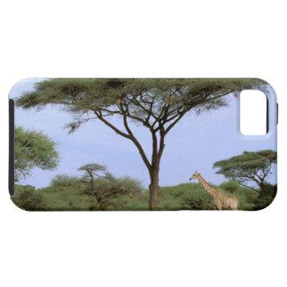 Africa, Botswana, Okavango Delta. Southern iPhone 5 Case