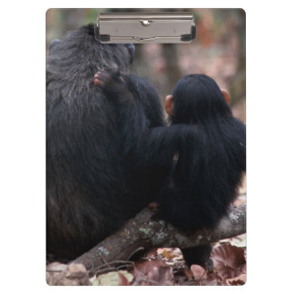 Africa, East Africa, Tanzania, Gombe National 2 Clipboards