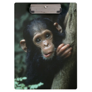 Africa, East Africa, Tanzania, Gombe National Clipboards