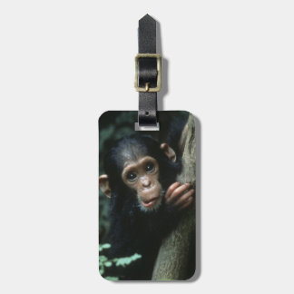Africa, East Africa, Tanzania, Gombe National Luggage Tag