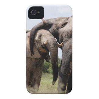 Africa Elephant Family iPhone 4 Case