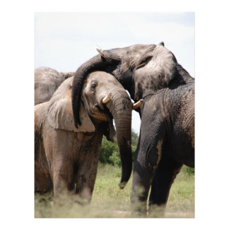 Africa Elephant Family Letterhead