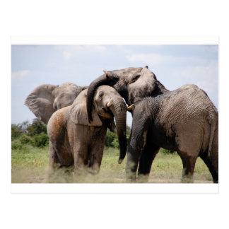 Africa Elephant Family Postcard
