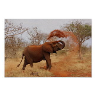 Africa - Elephant Poster