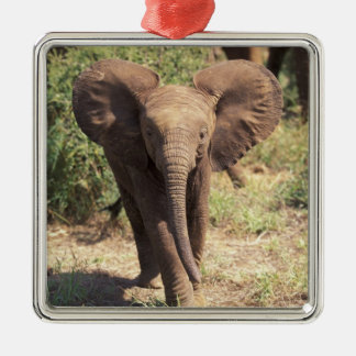 Africa, Kenya, Amboseli National Park. African 2 Metal Ornament