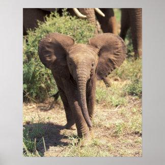 Africa, Kenya, Amboseli National Park. African 2 Poster
