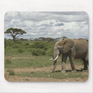 Africa, Kenya, Amboseli National Park, elephant, Mouse Pad