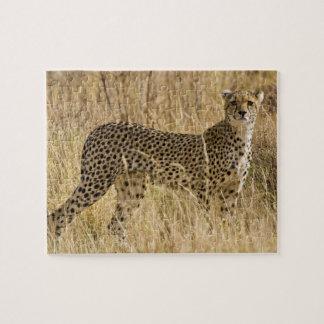 Africa. Kenya. Cheetah at Samburu NP. 2 Jigsaw Puzzle