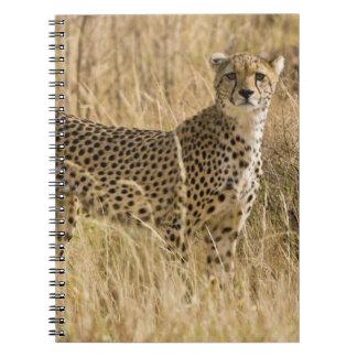 Africa. Kenya. Cheetah at Samburu NP. 2 Notebook