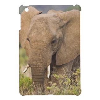 Africa. Kenya. Elephant at Samburu NP. iPad Mini Covers