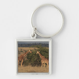 Africa, Kenya, Lewa Downs, Two reticulated Silver-Colored Square Keychain