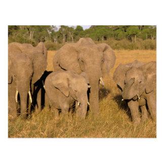 Africa, Kenya, Masai Mara. African Elephant Postcard