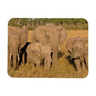 Africa, Kenya, Masai Mara. African Elephant Rectangular Photo Magnet