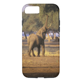 Africa, Kenya, Masai Mara. Elephant (Loxodonta iPhone 7 Case
