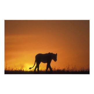 Africa, Kenya, Masai Mara Game Reserve, 3 Photo Art