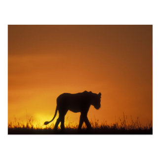 Africa, Kenya, Masai Mara Game Reserve, 3 Postcard