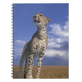 Africa, Kenya, Masai Mara Game Reserve, Adult 2 Notebook